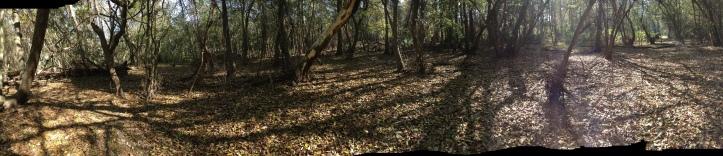 Clearing in Cypress Creek MTB trails